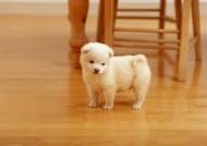 可爱小狗崽图片_14张