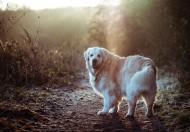 可爱宠物狗的图片_10张