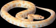 各類蛇的透明背景PNG圖片_19張