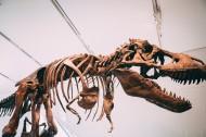 恐龍化石圖片_13張