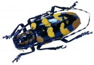 昆虫图片_66张