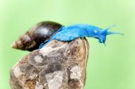 蓝蜗牛图片_6张