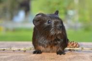 机灵可爱的老鼠图片_11张