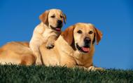 两只狗狗的亲密合照图片_16张