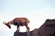 羚羊图片_11张