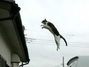 街角流浪猫图片_50张