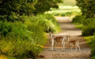 森林里的鹿图片_24张