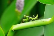 螳螂图片_9张
