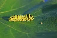 趴在植物上的毛毛虫图片_12张