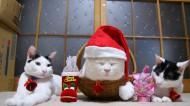 戴帽子可爱的猫图片_20张
