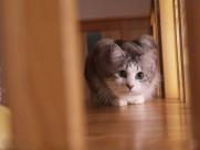 猫咪生活图片_30张
