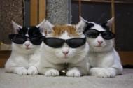 超级憨态可爱的猫叔图片 第二辑_78张