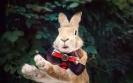 萌寵的兔子圖片_5張
