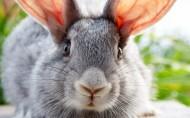 萌宠小兔子图片_14张
