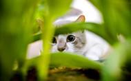 猫咪图片_20张