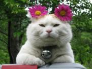 超级憨态可爱的猫叔图片 第一辑_63张