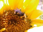 蜂花之恋图片_30张