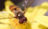 蜜蜂图片_26张