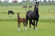 母马和马驹图片_19张