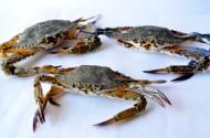 螃蟹高清图片_14张