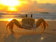 螃蟹圖片_15張