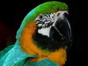 古靈精怪的鸚鵡圖片_18張