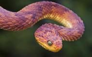 爬行動物蛇的圖片_15張