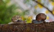 爬行的蜗牛图片_11张
