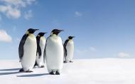 呆萌的企鹅图片_21张