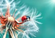 紅色瓢蟲圖片_7張