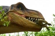 恐龙模型和恐龙化石图片_11张