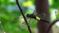蜻蜓图片_8张