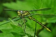 蜻蜓高清图片_15张