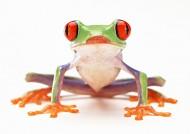 青蛙图片_27张