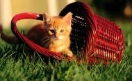 趣味猫咪图片_30张