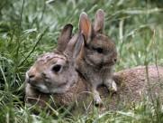 超萌的兔子图片_10张