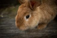 毛茸茸的兔子圖片_15張