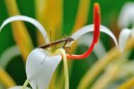 花丛里的螳螂图片_9张