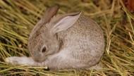 心爱超萌兔子图片_20张