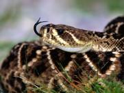 蛇图片_21张