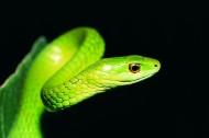 蛇图片_27张