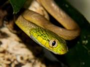 蛇圖片_36張
