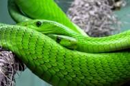 恐怖的蛇圖片_10張