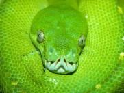 蛇圖片_20張