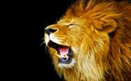 狮子图片_9张
