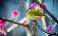 站在树枝上的小鸟图片_13张