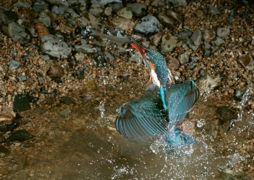 点击大图看下一张:四季鸟鸣图片