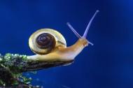 蜗牛图片_11张