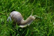 爬行缓慢的蜗牛图片_14张