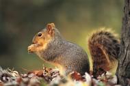可爱的小松鼠图片_11张